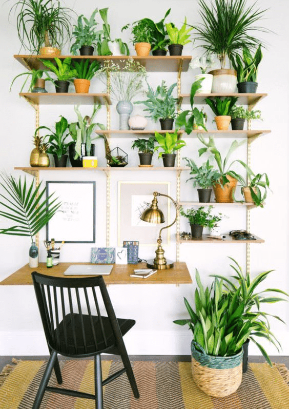 workspace decor, plants in workspace, plants in the office