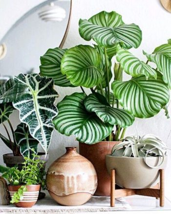 2018-interior-decor-trends-patterned-plants