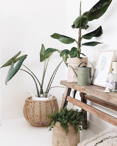 /interior-decor-trends-2018-rattan-plants-baskets-rattan-decor-