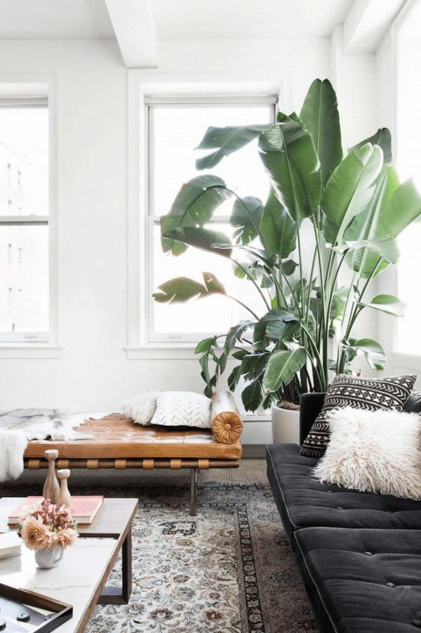indoor-plants-trendy-plants